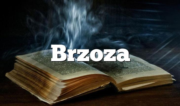 Brzoza