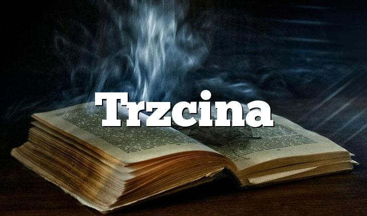 Trzcina